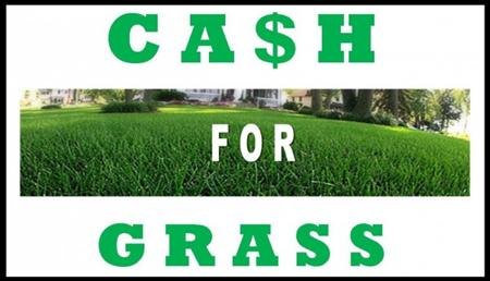 Cash-for-Grass4.jpg
